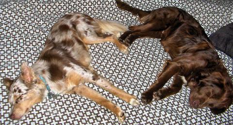 幸せを呼ぶハートマークを持つ猫と犬の写真