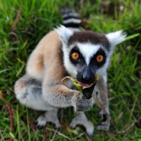 超可愛い動物たちに癒される写真