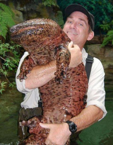 マジで驚く巨大生物の画像