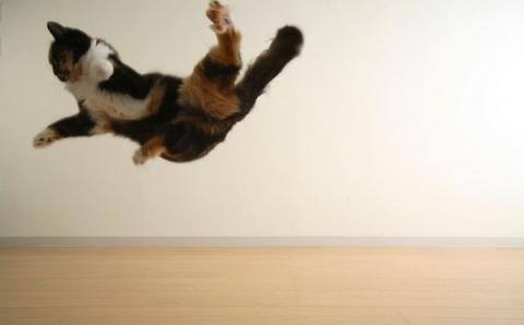 空中を楽しく飛行する猫たちの写真