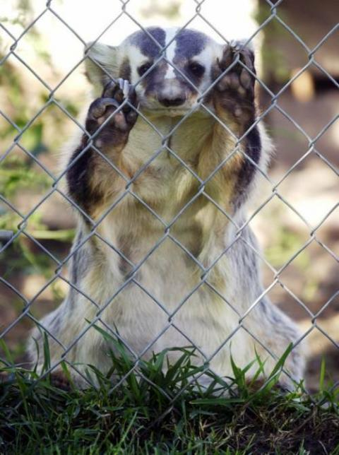 かわいい動物たちが手を振って「バイバイ」の動作する写真