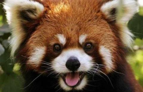 かわいい動物の画像