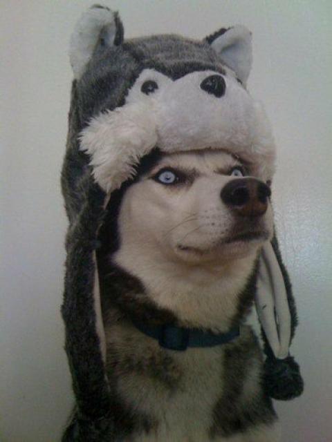 動物たちが何かコスプレで変身した姿の写真
