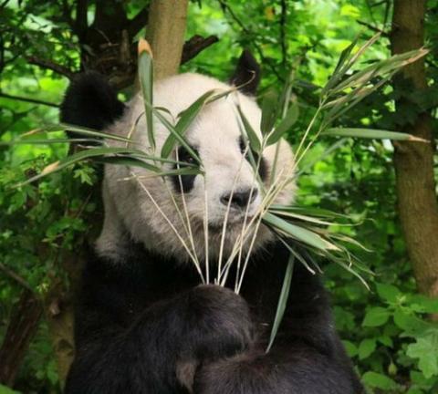 「かくれんぼ」している動物たちの可愛い写真