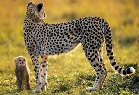 美しい野生の生き物の写真
