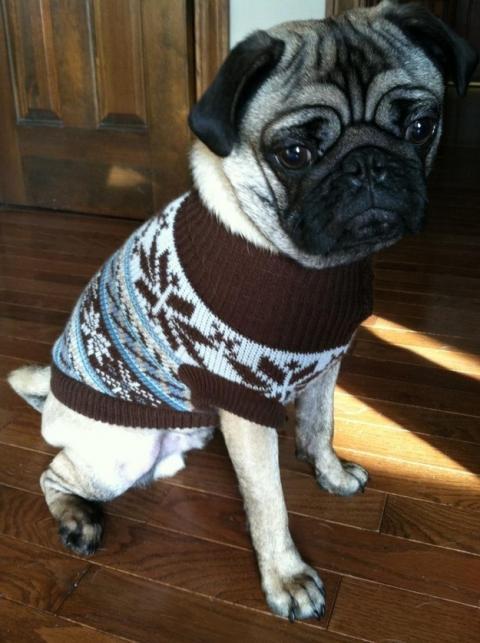 セーター着た暖かそうな動物画像