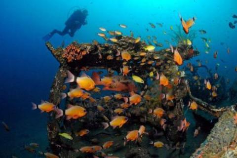 車が海に沈んでしばらくして魚の住まいになった写真