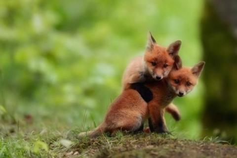 本当に可愛すぎる動物たちの写真