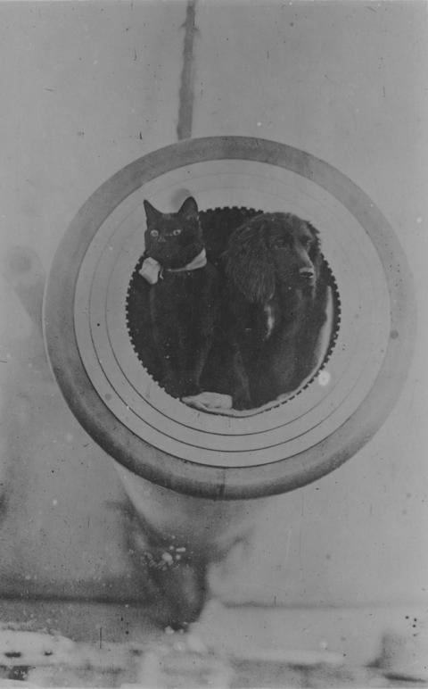 軍艦に乗る猫の歴史的写真