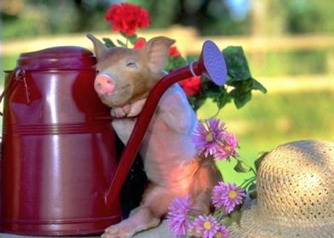 ふかふかした可愛すぎる動物画像
