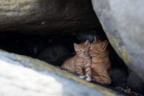福岡にあった猫の島の写真