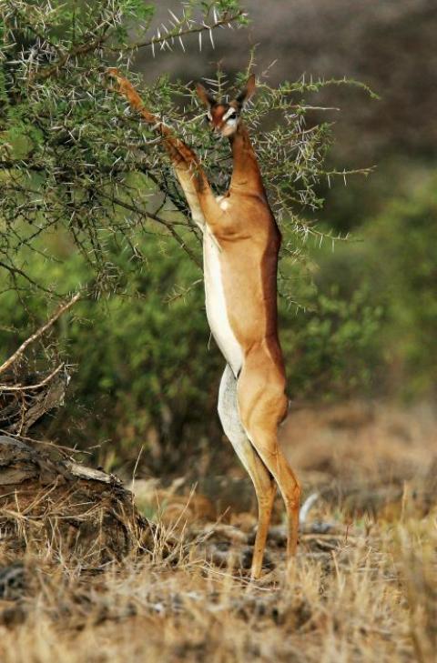アフリカの野生動物たちの画像