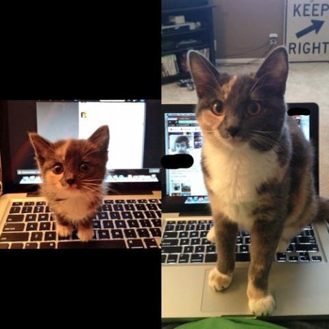 動物たちの赤ちゃん時代と今を比較した写真いろいろ