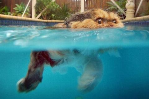 猫は水が苦手は嘘??水泳を楽しんでいるかもしれない可愛い猫達の写真