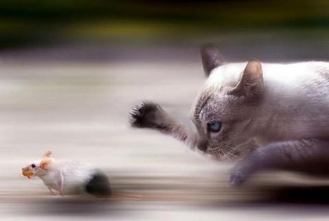 良くこんな画像を撮影したなという動物の写真