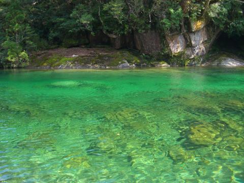 神秘的な屋久島の自然の写真