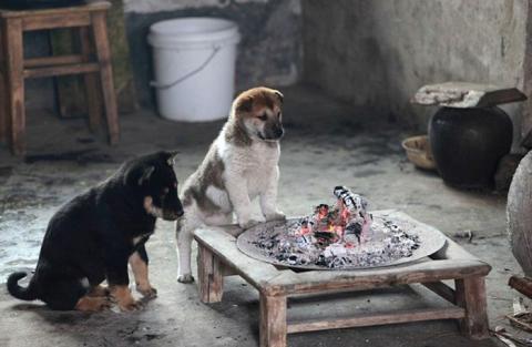 炭火で暖を取る子犬たちの可愛い写真