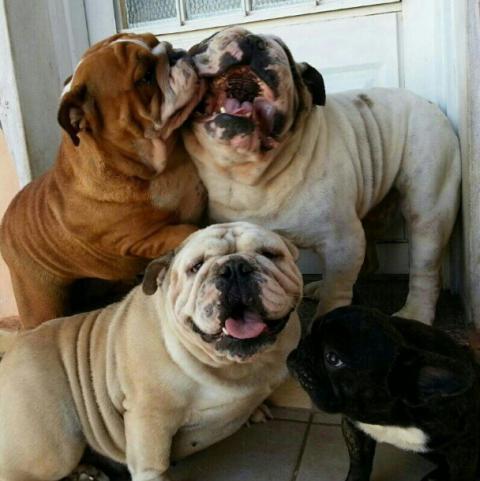 仲良しの犬たちが可愛らしい写真