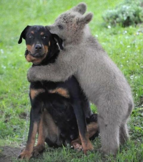仲良しの動物カップルたちが可愛すぎる写真