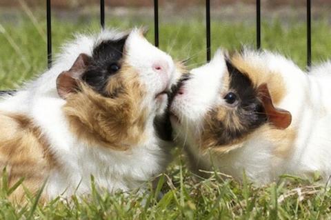 動物たちがキスする写真