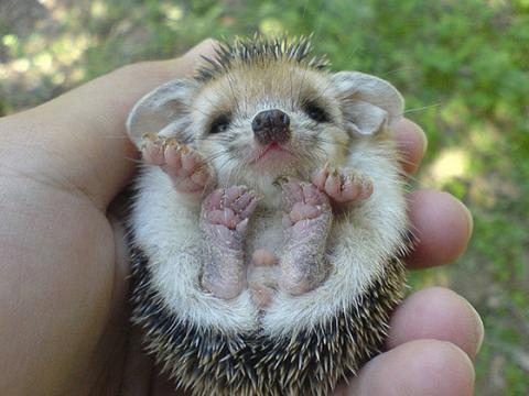可愛すぎる動物の赤ちゃんの画像