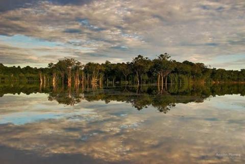 アマゾンの森がマジで凄すぎた写真